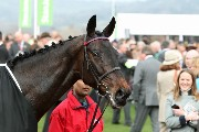 Sprinter Sacre at Cheltenham