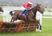 The New One at Cheltenham